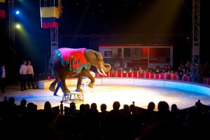 By Sebastiaan ter Burg from Utrecht, The Netherlands (Elephant at Circus Maximum) [CC BY 2.0 (httpcreativecommons.orglicensesby2.0)], via Wikimedia Commons