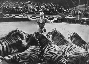 Ringling_Bros_and_Barnum_&_Bailey_Circus_Gunther_Gebel-Williams_1969 (1) httpscommons.wikimedia.orgwikiFile3ARingling_Bros_and_Barnum_26_Bailey_Circus_Gunther_Gebel-Williams_1969.jpg